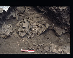 A Neanderthal skeleton in situ in Amud, Israel. Image by William Kimbel.
