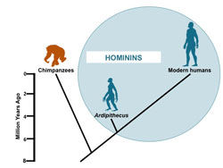 When hominins split away from the other ape descendants of our common ancestor. Click for more detail.