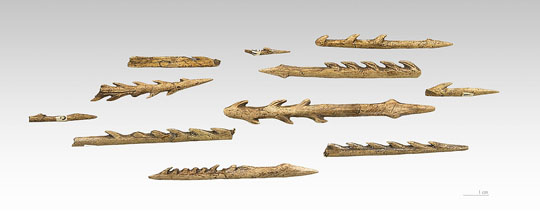 Harpoons like these were used by Middle Stone Age people 90,000 years ago to hunt large catfish in the Democratic Republic of the Congo. Image by Didier Descouens.