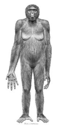 An artist's reconstruction of Ardi. Click for more detail.