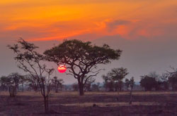 Sunset over the modern Serengeti in Tanzania. Image by Anita Ritenour.