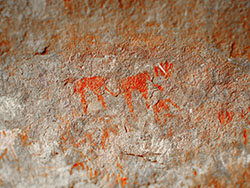 Rock art showing elephants painted at Wonderwerk Cave, South Africa using red ochre. This may have been painted for good luck during a hunt. Image by Ben Schoville.