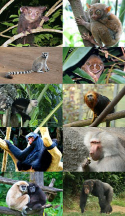 Primates. Click for more detail.