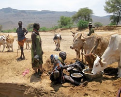 The Turkana rely on animals like cows, goats, and camels for milk, meat, and transportation.