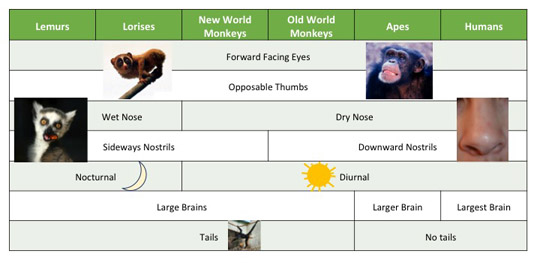 Here's a recap of some of the traits all primates share and some of the traits that differentiate primates from each other.
