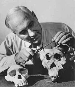Louis Leakey examing skulls from Olduvai Gorge. Image from public domain.