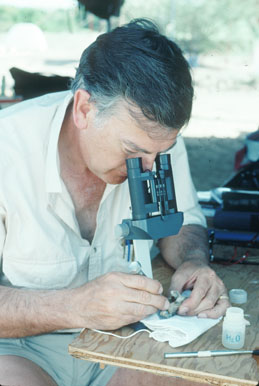 Dr. Donald Johanson examining a fossil in the lab tent in the field in Hadar. Image by Nancy Khan.