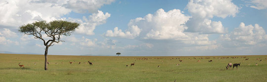 An African savanna. Many researchers think hominins evolved in environments similar to this one. Image by Josski.
