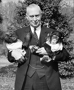 Here's a man with a baby gorilla (on the left) and a baby chimpanzee (on the right). Do you see some traits they all have in common?