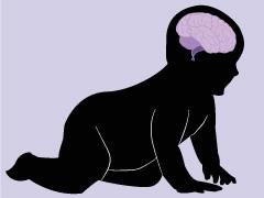 Do humans have big brains? image
