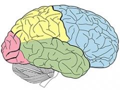 Brains over Brawn illustration