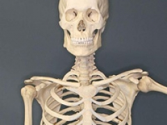 Skeleton image by Sklmsta