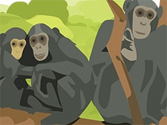 Team Primates thumbnail Illustration