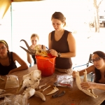 Cleaning fossils and bones from the field work