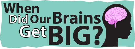 LInk to When Did Our Brains Get Big?