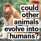 Primates overlaid with the title of the video