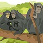 Primate illustration